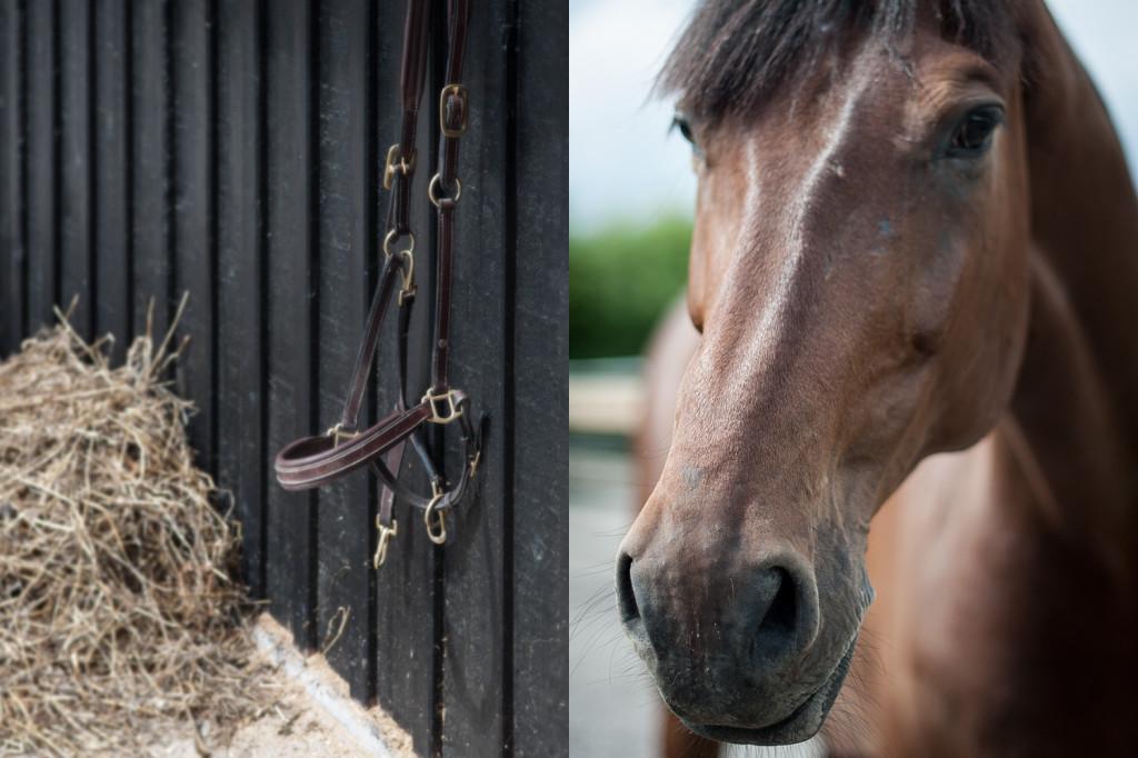 horse-hay